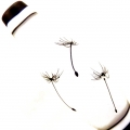 Dandelion Seeds on White, glass focal bead